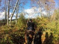 Salida a caballo por el bosque.