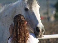 Dando mimos al equino