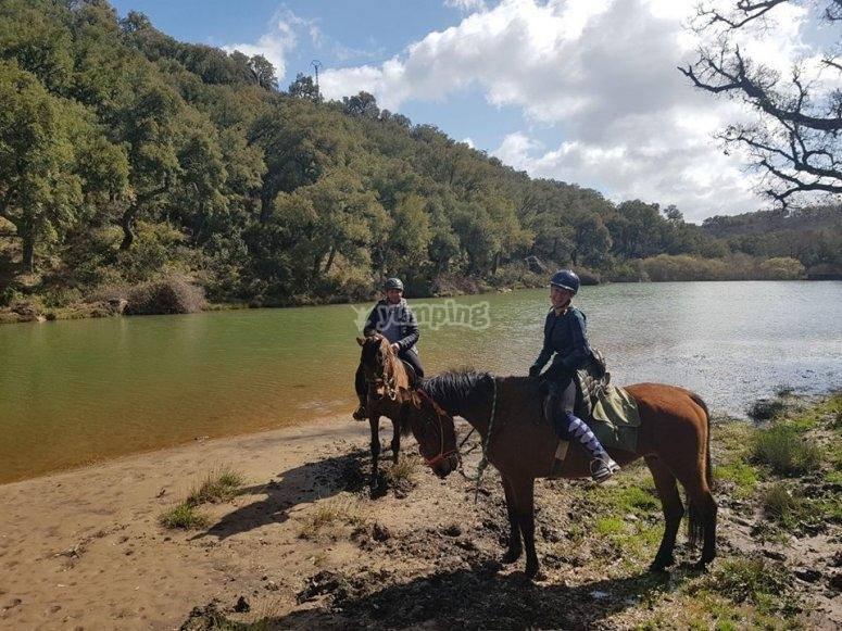 Caballos en la orilla del lago