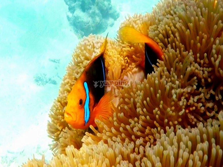 Bellissimo pesce