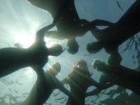 Il gruppo unito nell'acqua