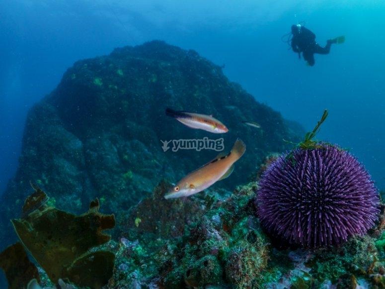 Descubriendo nuevas especies marinas