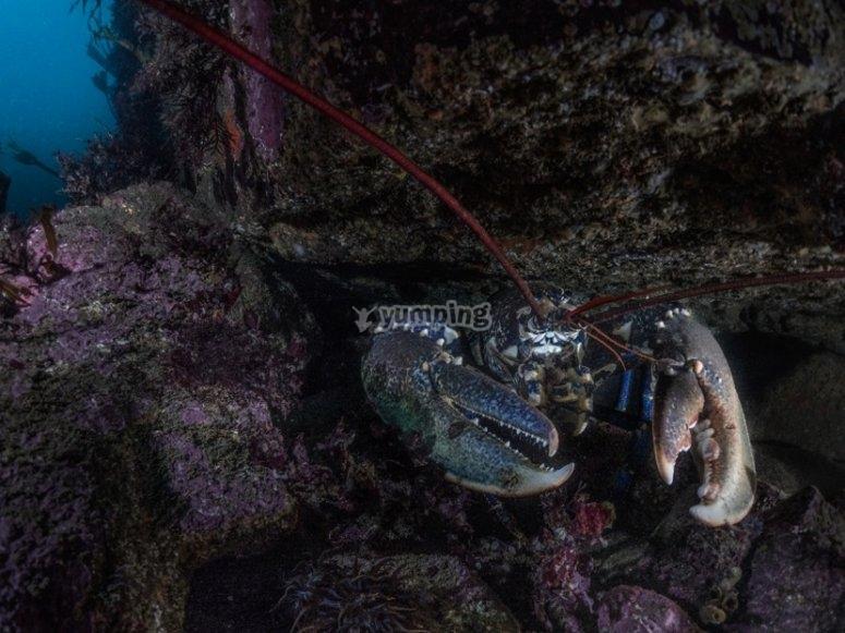 Especies marinas gallegas