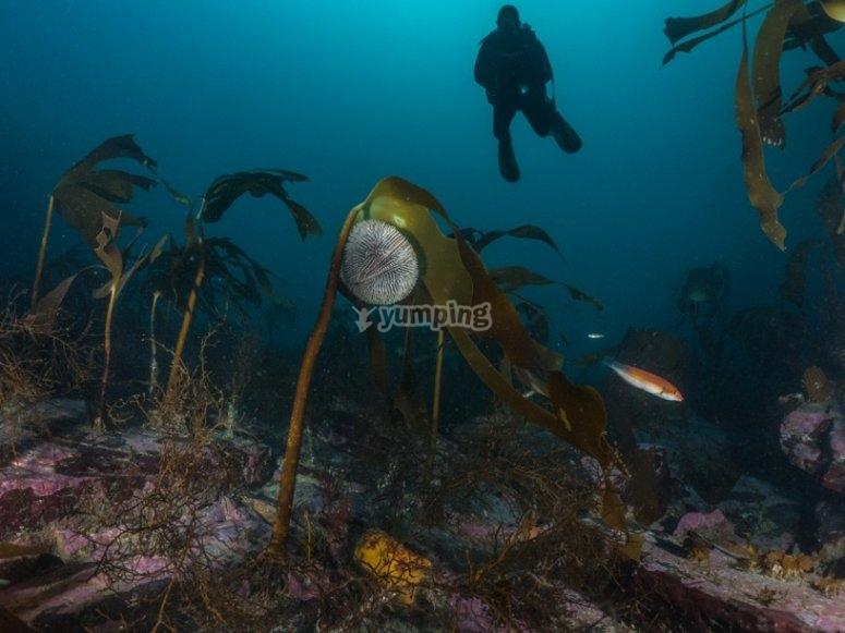 在海底航行