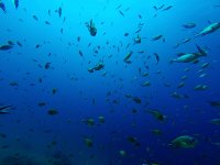 生活兰萨罗特岛潜水鱼雷维达兰萨罗特