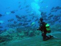 潜水学校附近潜水