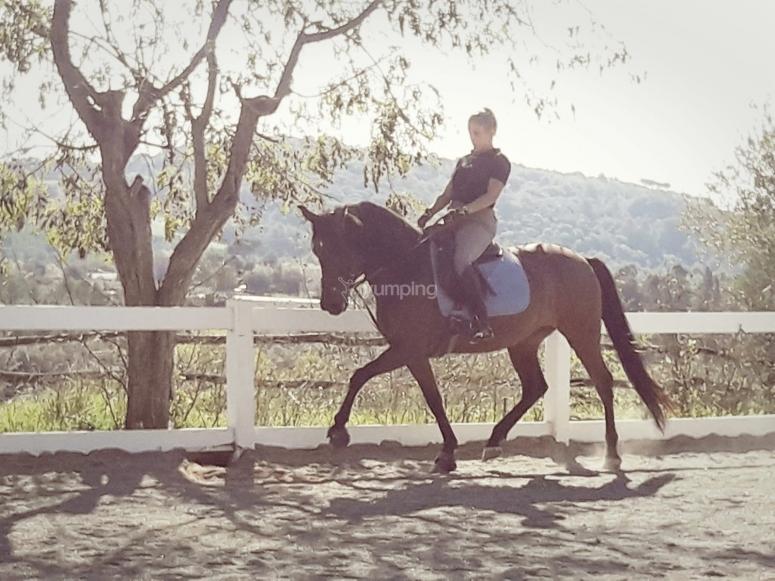 在露天赛道上学习骑马