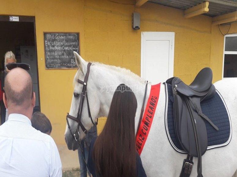 Celebrando el cumple de nuestro caballo