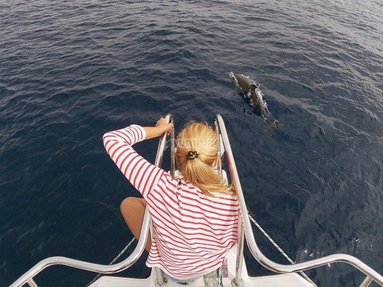 Ver delfines en la Isla de Lobos