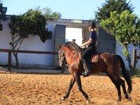 Paseo a caballo por los pinares de Chiclana