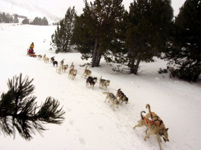 Mushing Pirineus Mushing