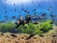 在鱼群中潜水