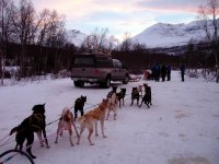 Mushing en los pirineos