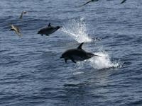 Delfines saltando al lado del barco
