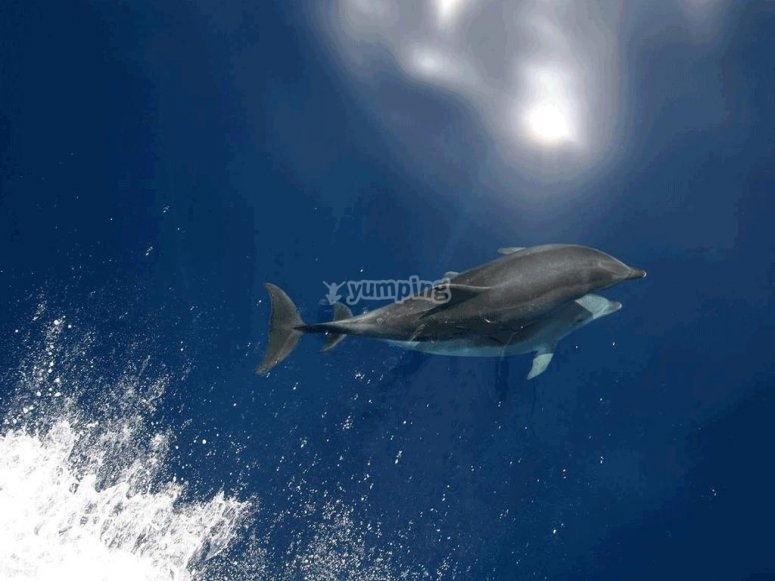 Delfines amigos