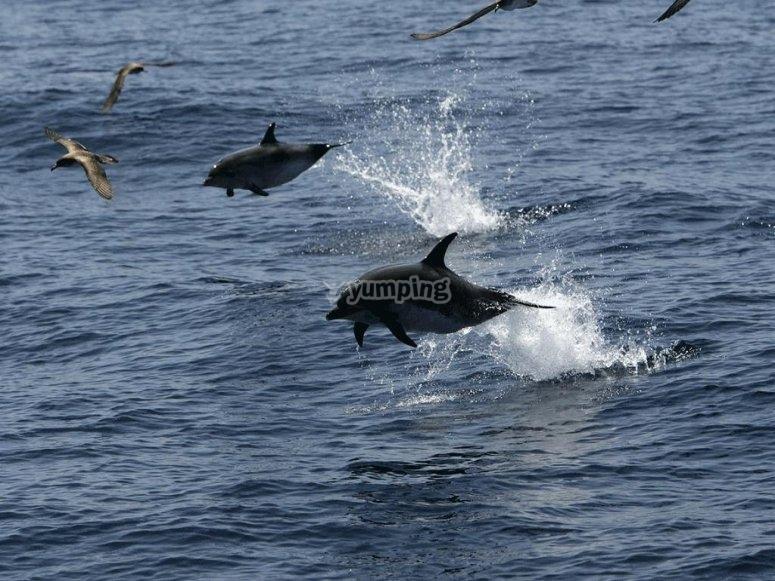 海豚在船旁跳跃