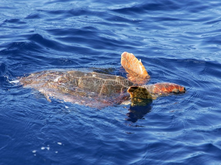 La Gomera的海龟