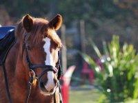 Imagen de uno de nuestros caballos