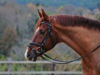 Preciosa imagen de nuestro caballo
