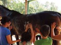 Niños en contacto con el caballo