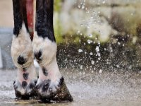 Espectacular imagen de las patas del caballo