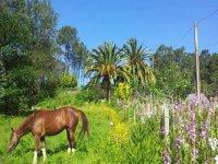 Campamento de equitación e inglés en Nigrán 1sem
