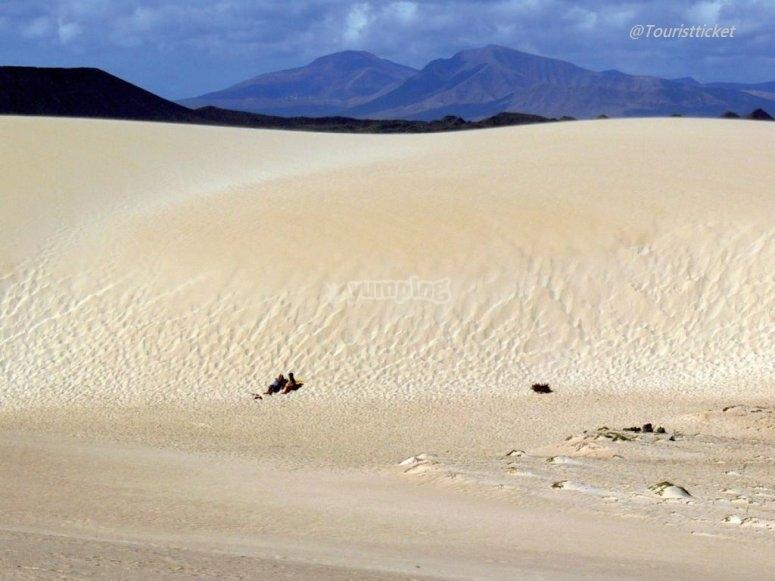 Dune corralejo