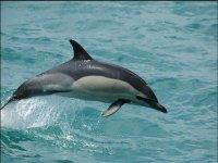 Delfín saltando en el mar