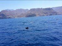 Manada de delfines por la costa canaria