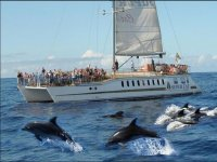 Presence from the boat to the herd of cetaceans