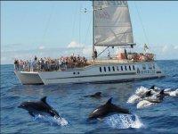 Presenciando desde el barco a la manada de cetáceos