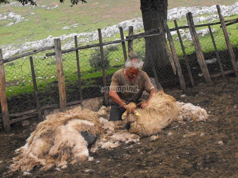 El mundo de los pastores
