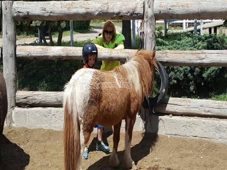 Pony marron