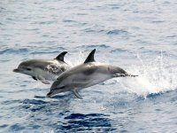 观看一对海豚