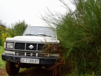 Vehicle between the bushes