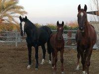 Algunos de nuestros caballos en el centro