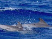 一对海豚和我们的船