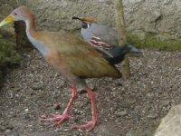 aves del parque