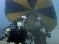 不可思议的海底保证乐趣开始