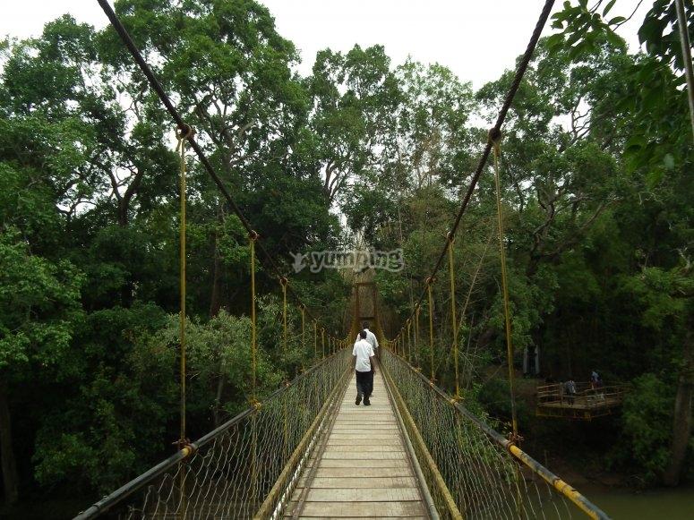Ejemplo de puente colgante