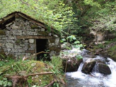 Ruta por Parque Natural de Ponga Bosque de Peloño