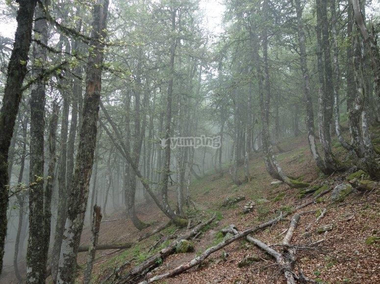 Etapa 4: bosques de Valdeón