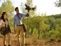 vuelos halcones