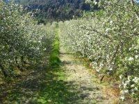 Visita a productora de sidra asturiana
