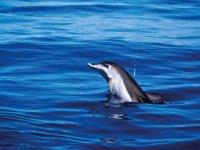 Delfin la palma
