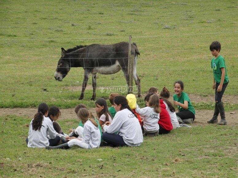 Sentadas junto al burro