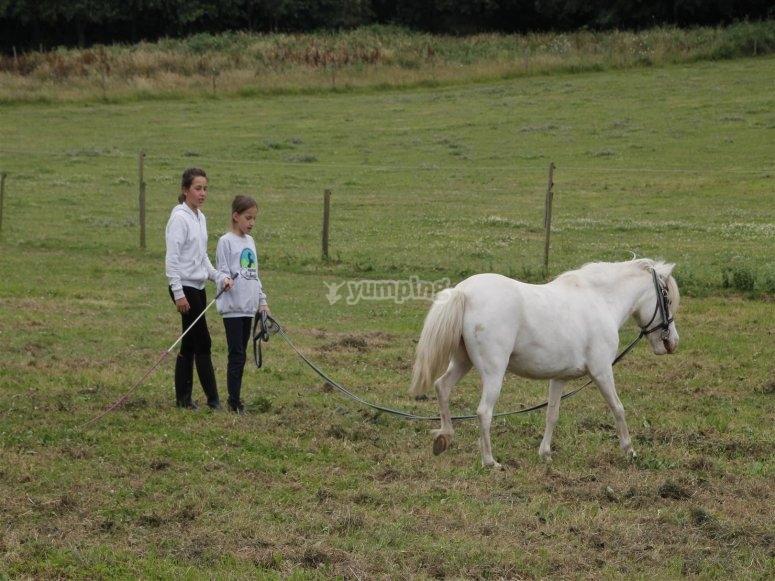 Dando cuerda al caballo