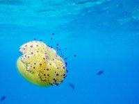 在巴利阿里群岛浮潜为团体