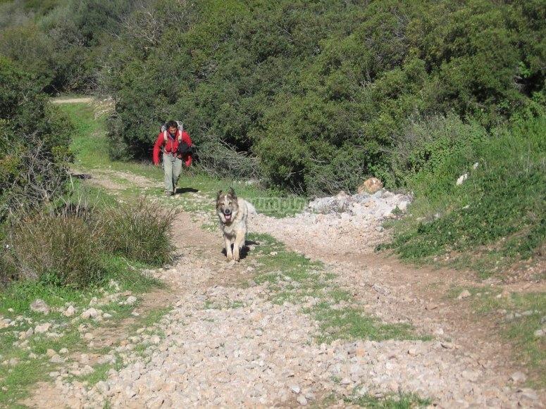 徒步旅行徒步旅行在科尔多瓦和宠物