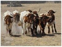 Excursión por ganadería y dehesa en Salamanca